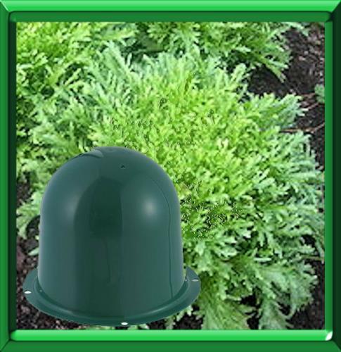 Coup de pouce blanchiment des legumes for Blanchir legumes pour congeler