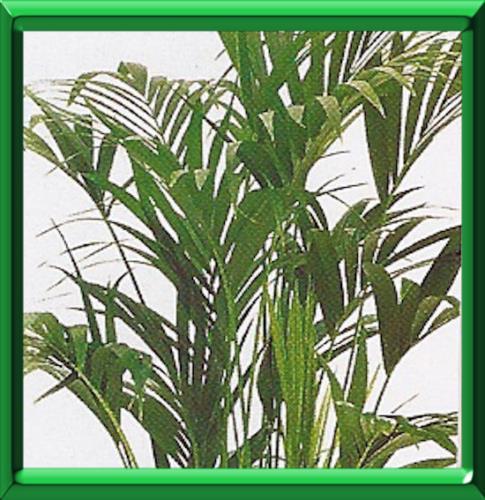 Plantes vertes d 39 interieur conseils pour l 39 hiver - Plantes vertes d interieur photos ...