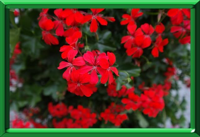 fleurs fanees - l'importance de bien les couper