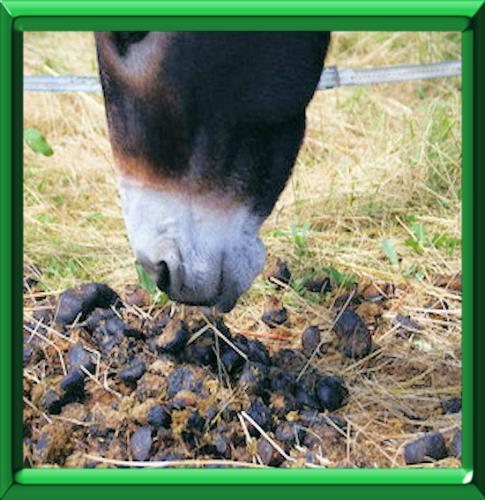 Mettre du crottin de cheval dans son jardin design de maison - Quand mettre du fumier dans son jardin ...